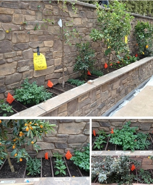 vegetable and flower edging ideas (20)