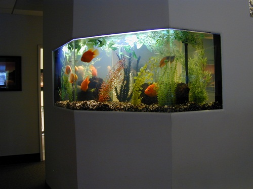 Captivating Fish Tanks Are Fantastic And Can Transform The Entire Outlook Of A Home.  The Use Of Aquarium Gravel In The Fish Bubble Below Looks Quite Beautiful  As It ...