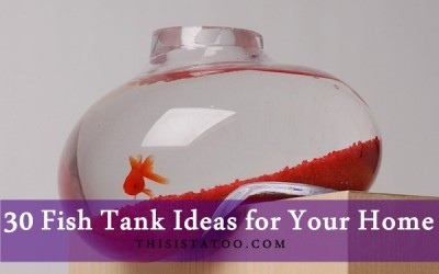 30 Fish Tank Ideas for Your Home