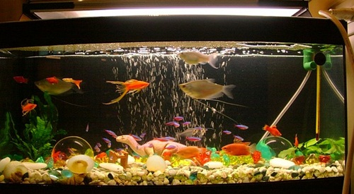 30 Fish Tank Ideas For A Relaxing Home