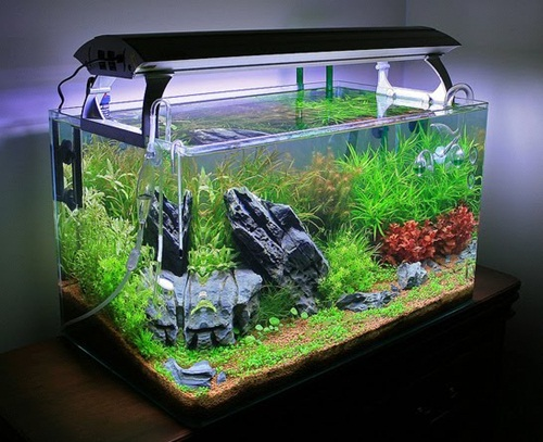 When Designing A Fish Tank For Your Home, Itu0027s Good To Use Elements That  Enhance The Outlook Of Your Home. Having A Fish Tank That Looks Natural And  As Part ...